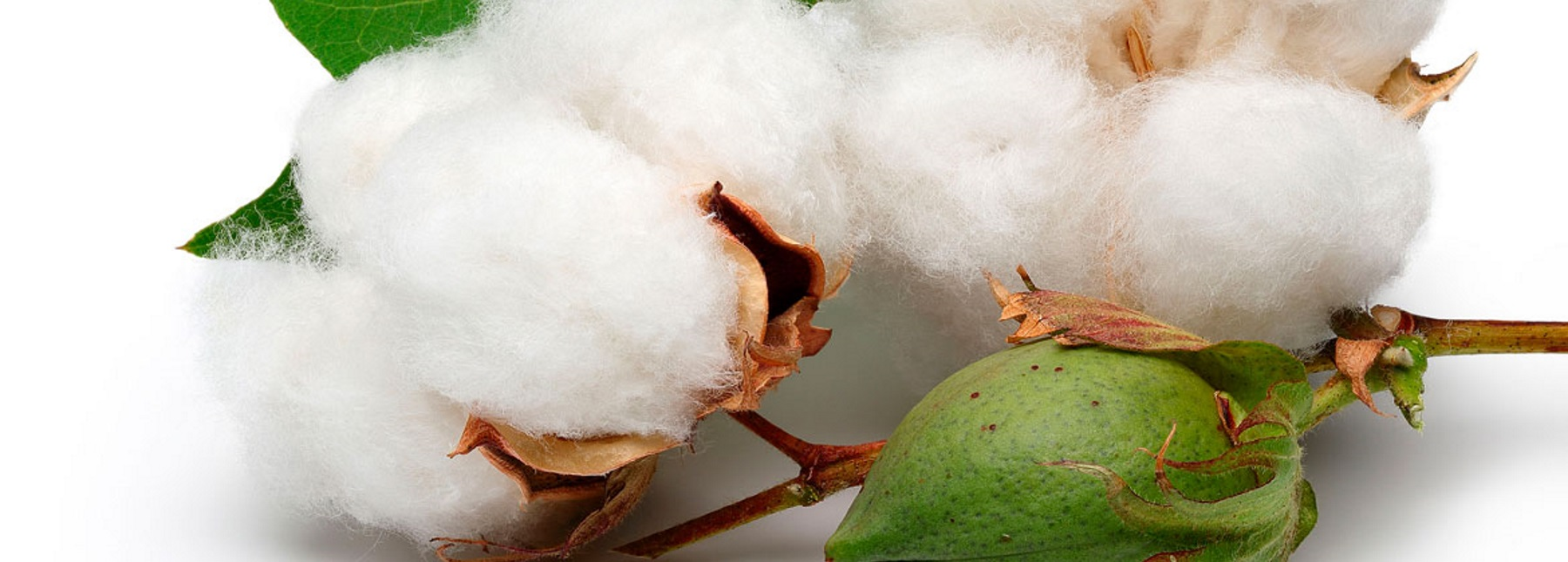 Say yes to organic cotton